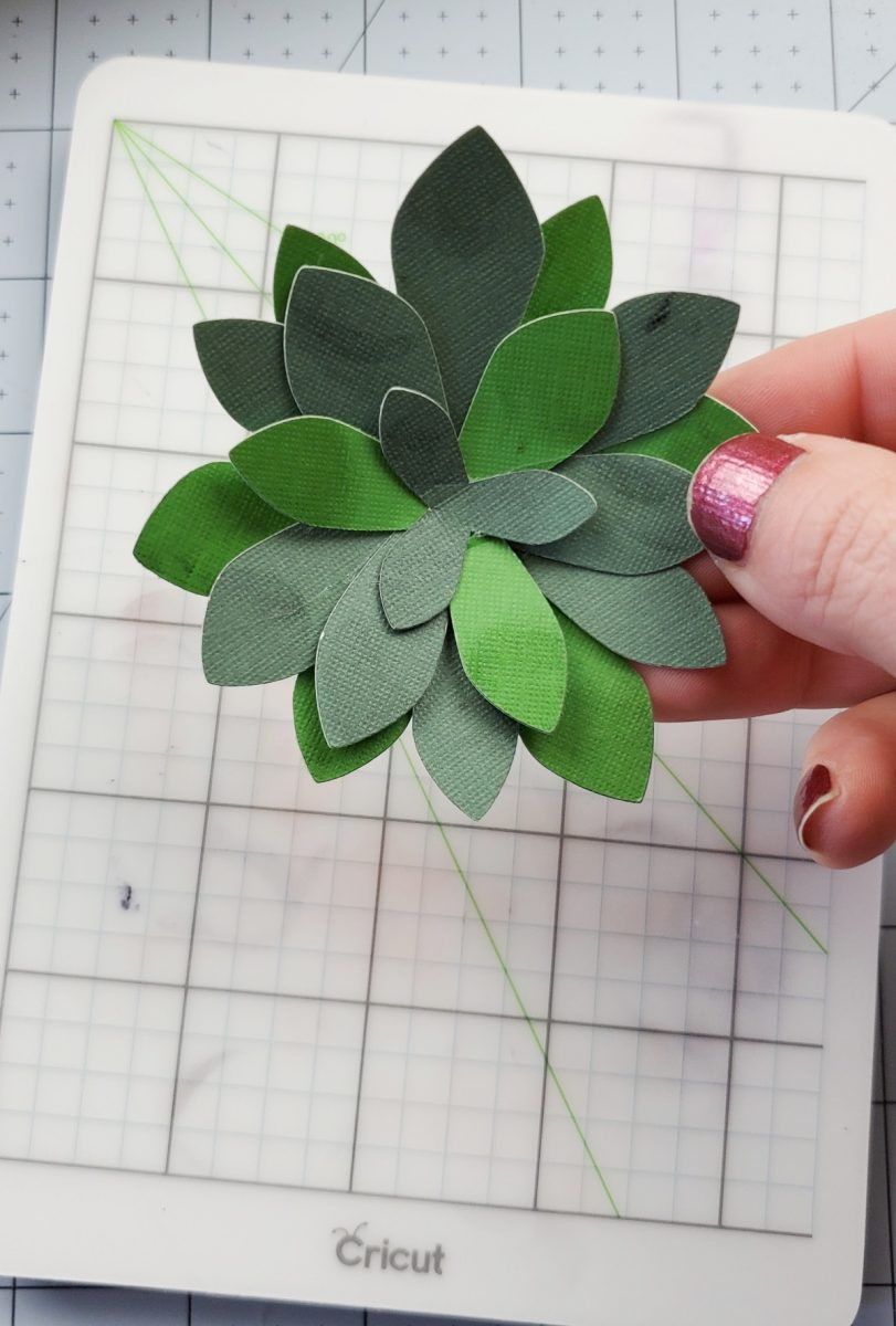 cricut succulent